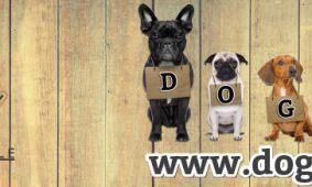 Verwen je hond bij Dogs & Co 1